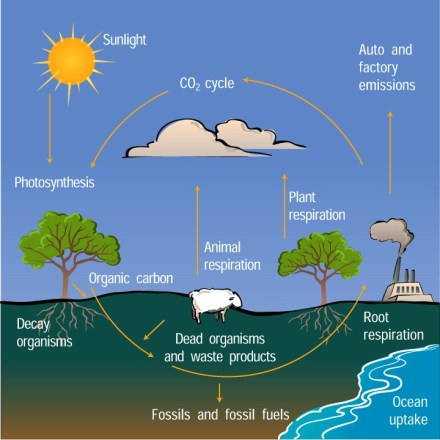 carboncycle